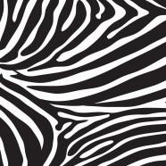Zebra-Black-White-kid